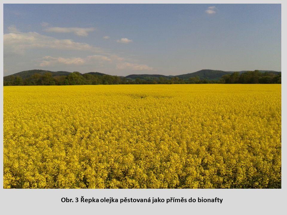 Obr. 3 Řepka olejka pěstovaná jako příměs do bionafty