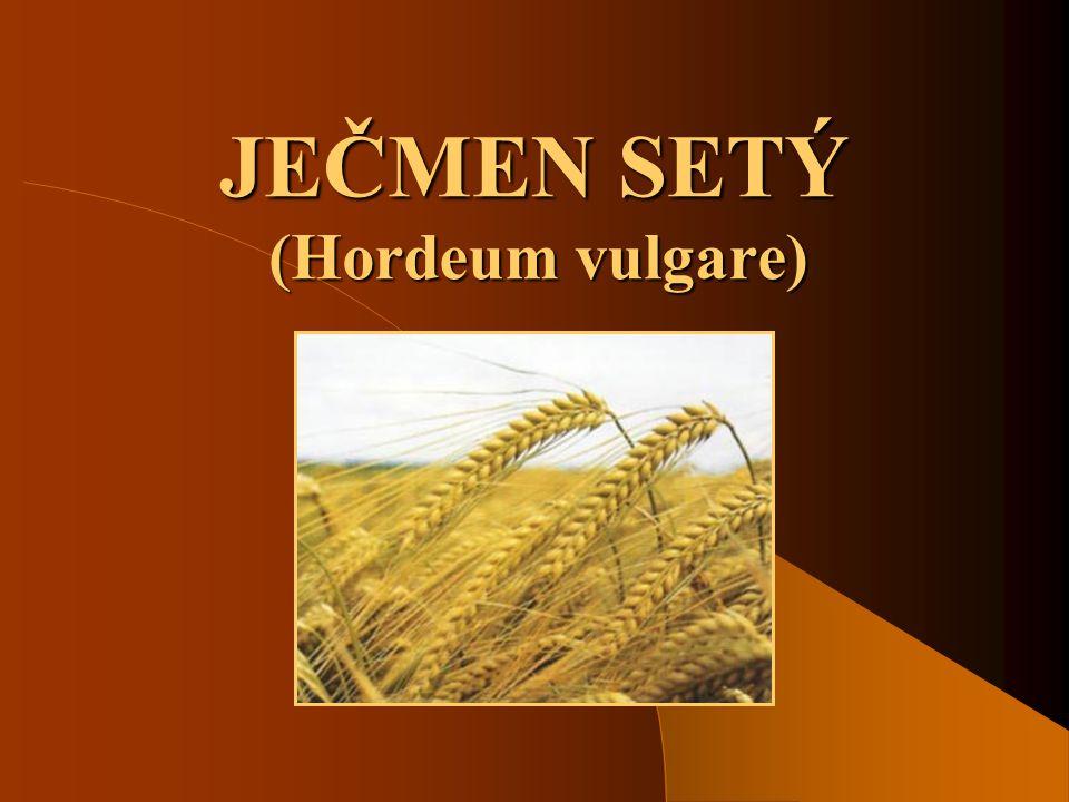 JEČMEN SETÝ (Hordeum vulgare)