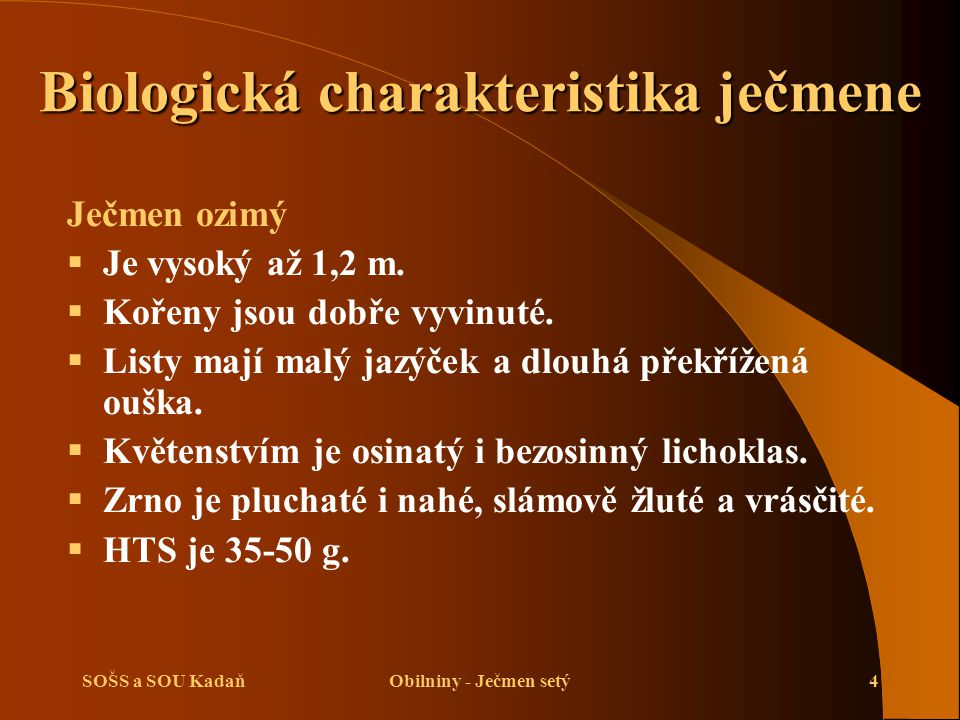 SOŠS a SOU KadaňObilniny - Ječmen setý4 Biologická charakteristika ječmene Ječmen ozimý  Je vysoký až 1,2 m.  Kořeny jsou dobře vyvinuté.  Listy ma