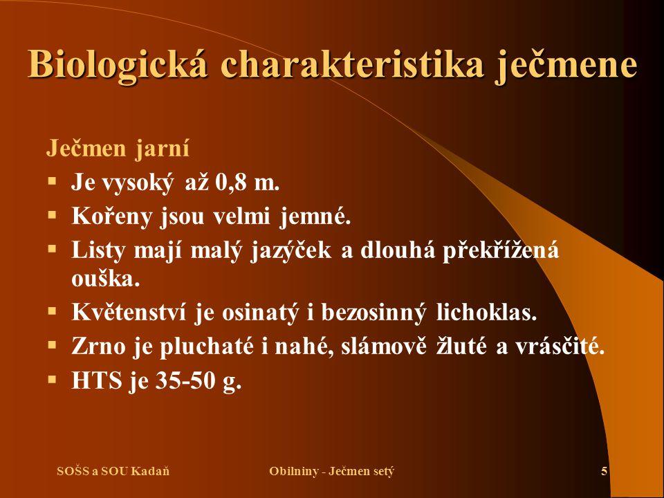 SOŠS a SOU KadaňObilniny - Ječmen setý5 Ječmen jarní  Je vysoký až 0,8 m.