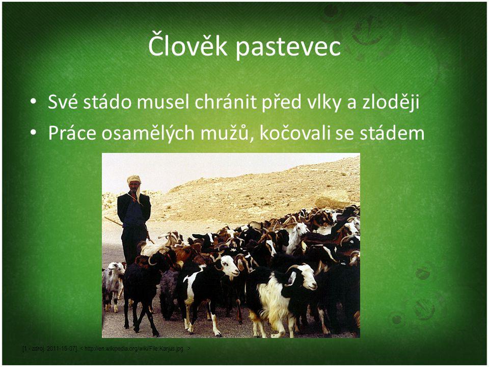 Člověk pastevec Své stádo musel chránit před vlky a zloději Práce osamělých mužů, kočovali se stádem [1 - zdroj.