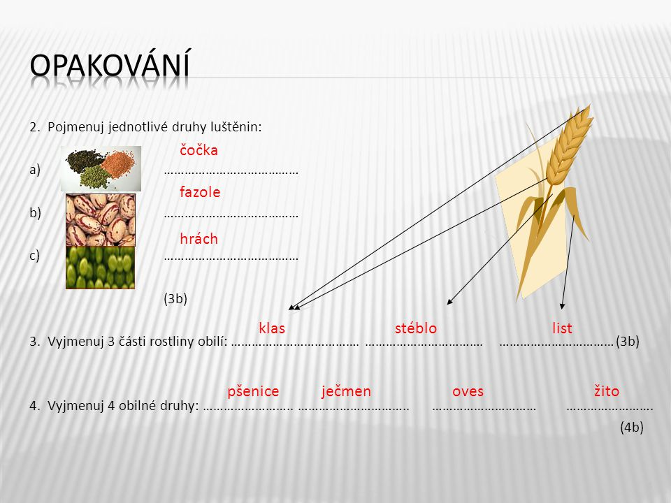 2. Pojmenuj jednotlivé druhy luštěnin: a) ………………………………… b) ………………………………… c)………………………………… (3b) 3. Vyjmenuj 3 části rostliny obilí: ……………………………….…………………