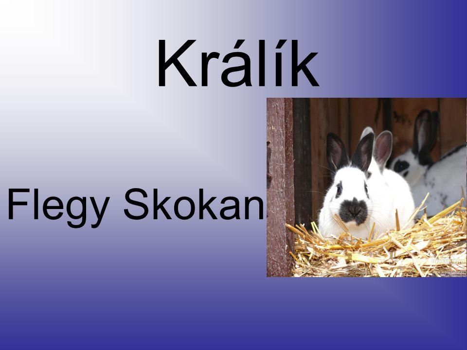Náš Flegy je český strakáč neobvyklé barvy je bílý a má světle hnědé flíčky