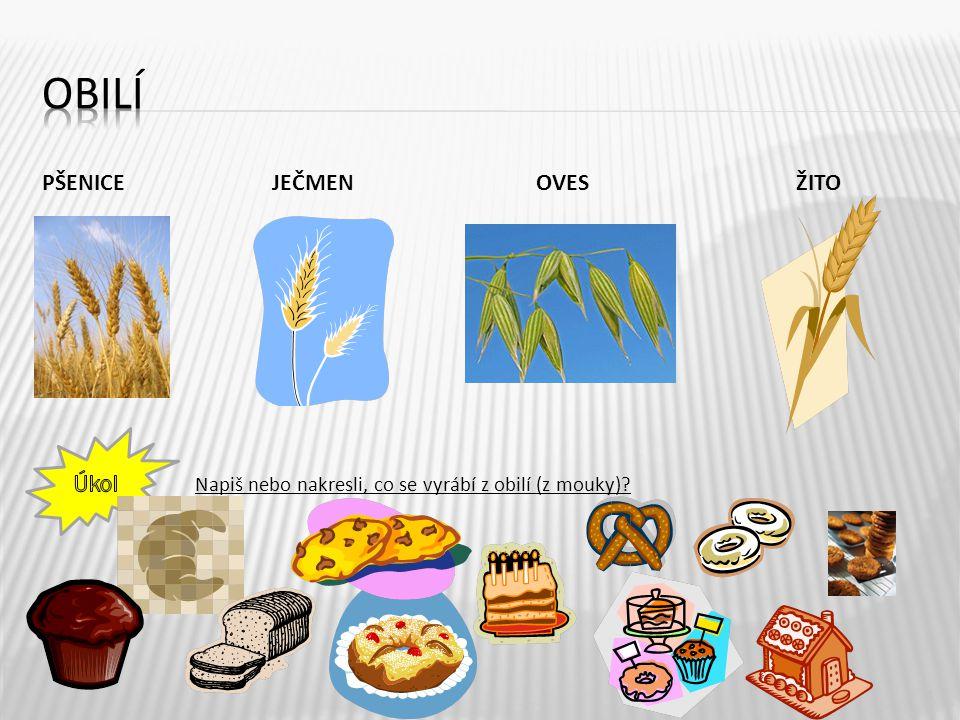 PŠENICE JEČMEN OVES ŽITO 4 Napiš nebo nakresli, co se vyrábí z obilí (z mouky)?