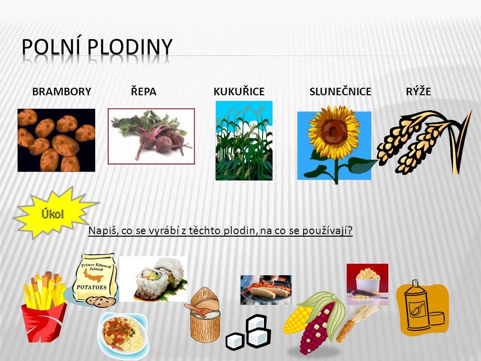 BRAMBORY ŘEPAKUKUŘICESLUNEČNICERÝŽE Napiš, co se vyrábí z těchto plodin, na co se používají? 5