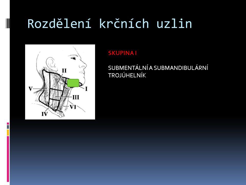 Rozdělení krčních uzlin SKUPINA II HORNÍ SKUPINA UZLIN PŘI VENA JUGULARIS INTERNA (HRANICE OPROTI SKUPINĚ III JE BIFURKACE KAROTIDY)