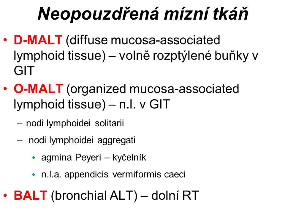 D-MALT (diffuse mucosa-associated lymphoid tissue) – volně rozptýlené buňky v GIT O-MALT (organized mucosa-associated lymphoid tissue) – n.l.
