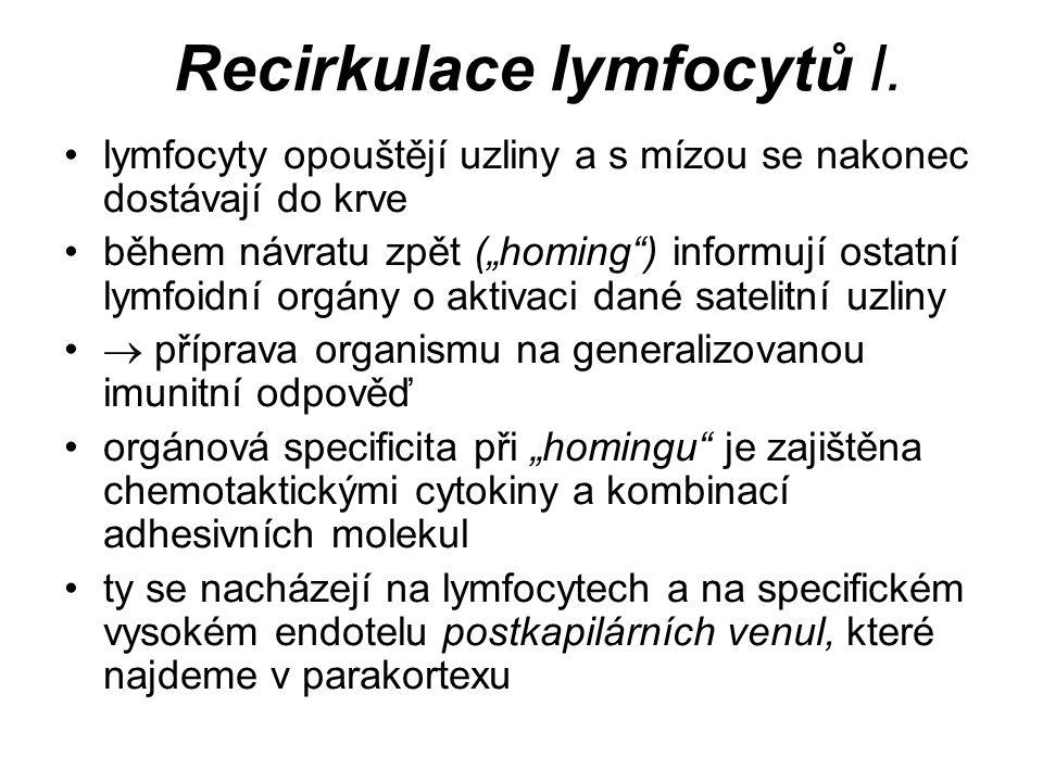 Recirkulace lymfocytů II.