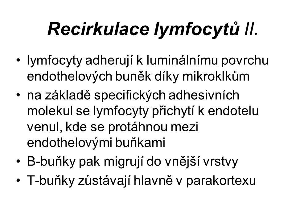 Mízní uzliny (Nodi lymphoidei) ( Nodi lymphatici, Lymphonodi ) tributární oblasti regionální uzliny sentinelová uzlina záněty – bolestivá zduření nádory – nebolestivá zduření elefantiáza TNM klasifikace