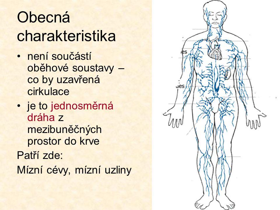Mízní cévy vznikají jako slepě zakončené mízní kapiláry v tkáňovém moku téměř ve všech orgánech stěny kapilár jsou propustné pro všechny látky v mezibuněčných prostorách včetně bílkovin, metabolitů, bakterií… kapiláry mízovody do žil v dolní části krku největší mízovod = hrudní mízovod – - sbírá mízu z dolní a levé poloviny těla míznice pravostranný kmen mízní = odvádí mízu z hlavy a pravé části hrudníku