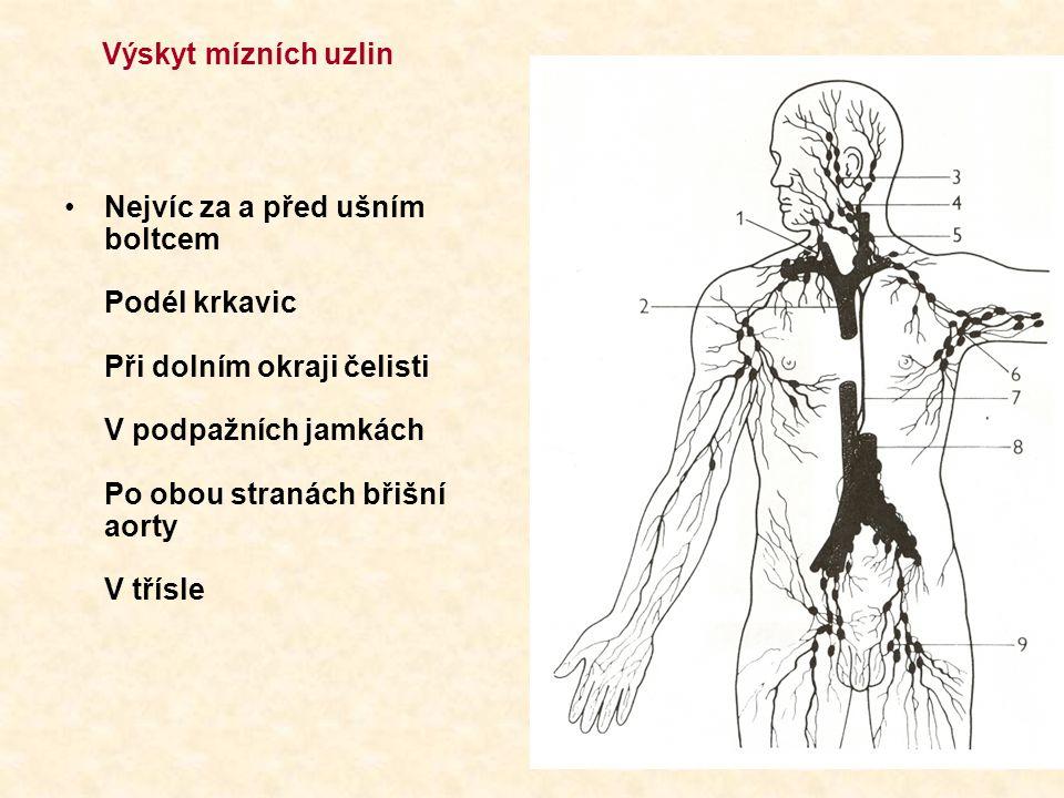 Slezina = největší lymfatický orgán v těle v břišní dutině pod levou brániční klenbou při páteři tvar = kávové zrno 12-20 cm dva typy tkáně = červená a bílou pulpou (dření) denně jí proteče 250-350 l krve píchání v levém boku při běhu - v červené pulpě – červené krvinky - v bílé pulpě – uzlíčky z lymfocytů - jsou zde i monocyty – přeměňují se v makrofágy – ty zde odbourávají 90% zanikajících červených krvinek