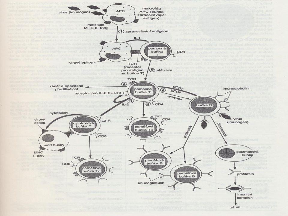 The Sentinel Lymph Node Concept Schauer, Becker, Reisner, Possinger