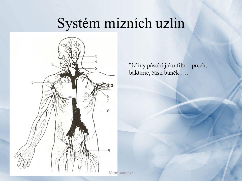Systém mizních uzlin Uzliny působí jako filtr – prach, bakterie, části buněk….. 4Mízní soustava