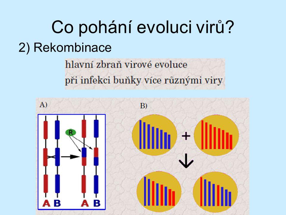 Co pohání evoluci virů? 1)Mutace
