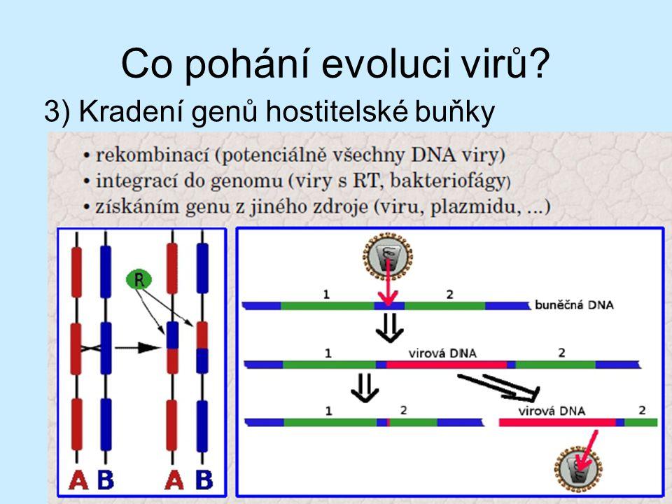 Co pohání evoluci virů? 2) Rekombinace