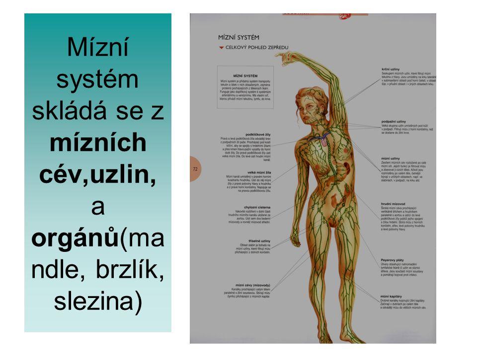 Mízní systém skládá se z mízních cév,uzlin, a orgánů(ma ndle, brzlík, slezina)