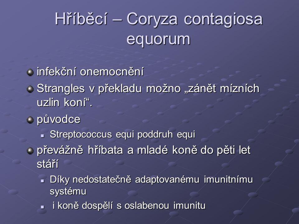 """Hříběcí – Coryza contagiosa equorum infekční onemocnění Strangles v překladu možno """"zánět mízních uzlin koní"""". původce Streptococcus equi poddruh equi"""