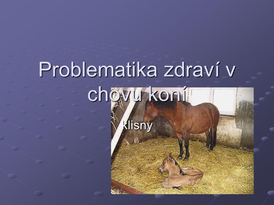 Problematika zdraví v chovu koní klisny