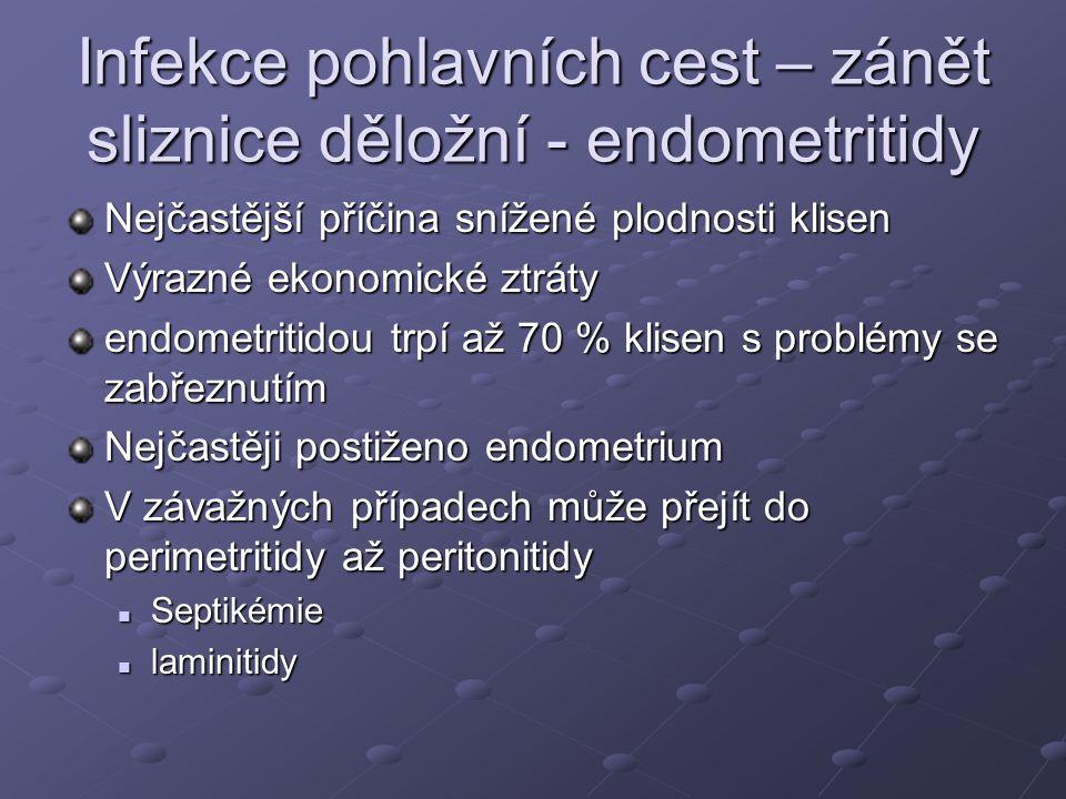 Infekce pohlavních cest – zánět sliznice děložní - endometritidy Nejčastější příčina snížené plodnosti klisen Výrazné ekonomické ztráty endometritidou