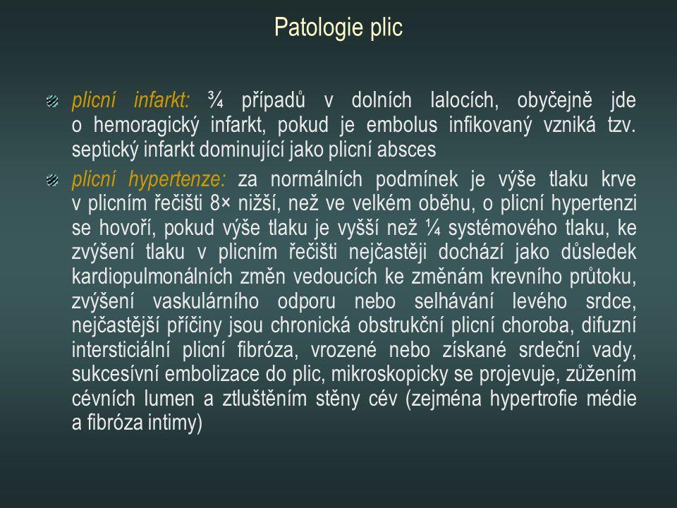 Patologie plic plicní infarkt: ¾ případů v dolních lalocích, obyčejně jde o hemoragický infarkt, pokud je embolus infikovaný vzniká tzv. septický infa