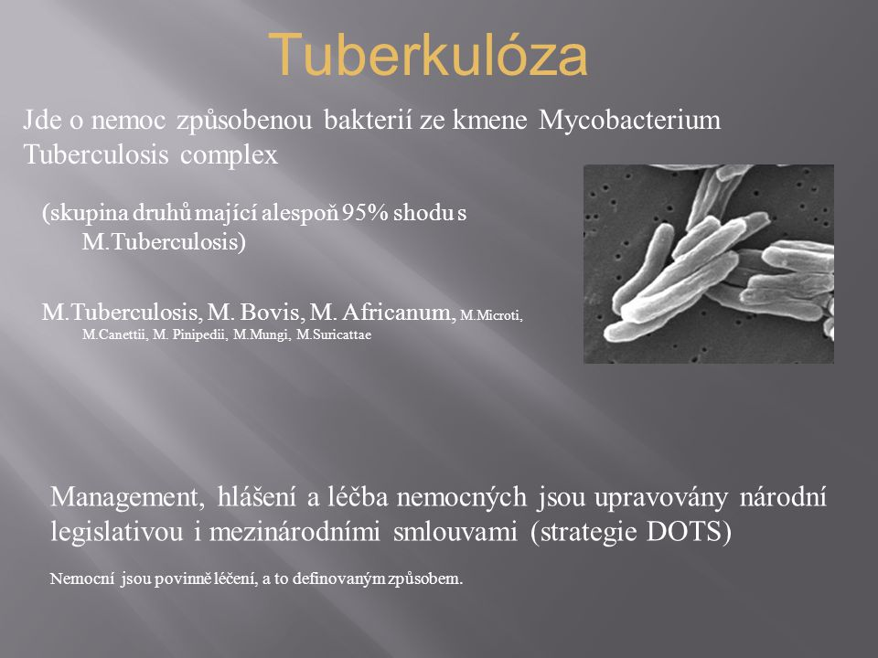 (skupina druhů mající alespoň 95% shodu s M.Tuberculosis) M.Tuberculosis, M. Bovis, M. Africanum, M.Microti, M.Canettii, M. Pinipedii, M.Mungi, M.Suri