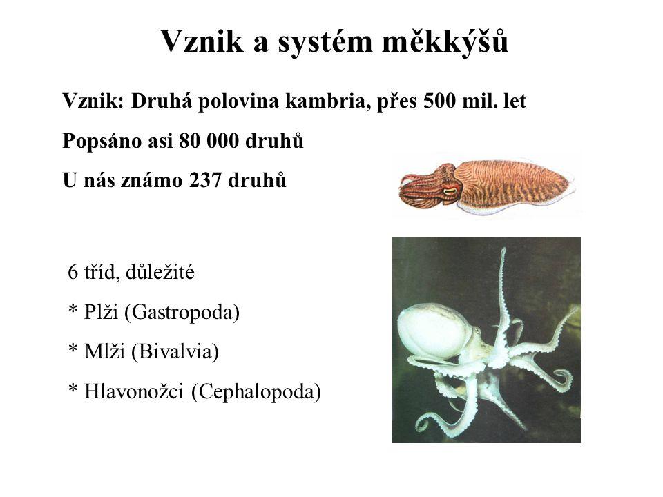 Vznik a systém měkkýšů Vznik: Druhá polovina kambria, přes 500 mil. let Popsáno asi 80 000 druhů U nás známo 237 druhů 6 tříd, důležité * Plži (Gastro