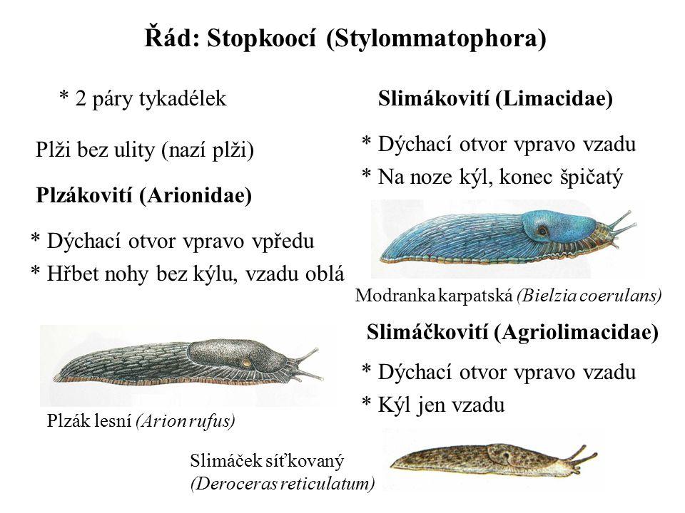 Řád: Stopkoocí (Stylommatophora) * 2 páry tykadélek Plzákovití (Arionidae) Plži bez ulity (nazí plži) * Dýchací otvor vpravo vpředu * Hřbet nohy bez k