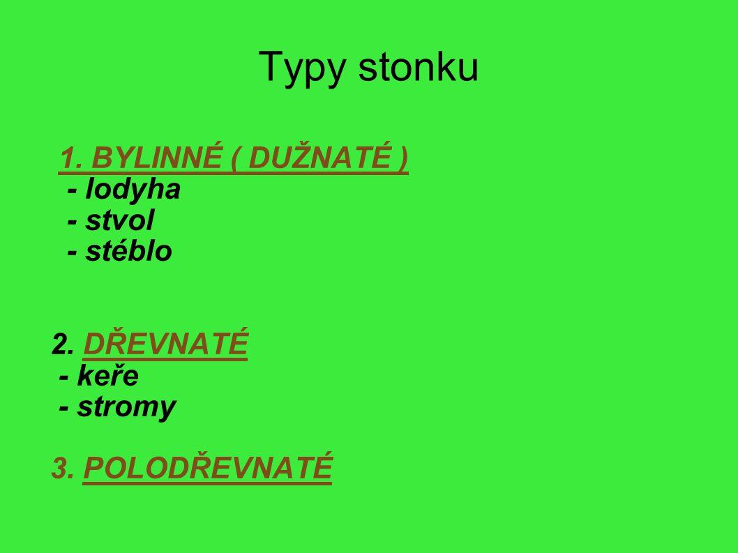 Typy stonku 1. BYLINNÉ ( DUŽNATÉ ) - lodyha - stvol - stéblo 2. DŘEVNATÉ - keře - stromy 3. POLODŘEVNATÉ
