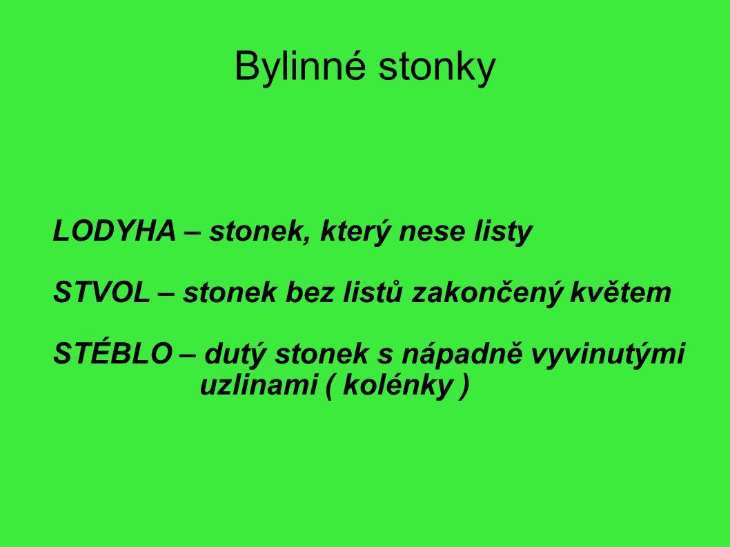 Bylinné stonky LODYHA – stonek, který nese listy STVOL – stonek bez listů zakončený květem STÉBLO – dutý stonek s nápadně vyvinutými uzlinami ( kolénk