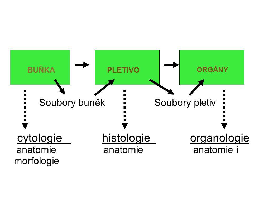 Soubory buněk Soubory pletiv cytologie histologie organologie anatomie anatomie anatomie i morfologie BUŇKAPLETIVO ORGÁNY