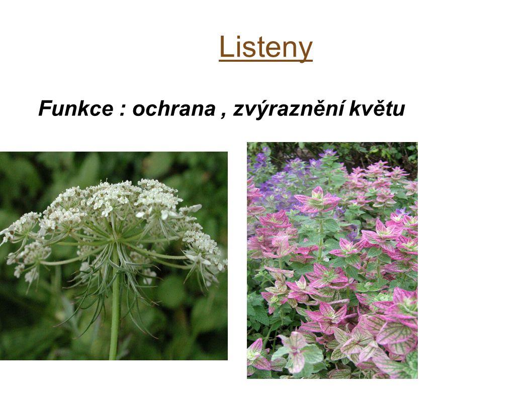 Listeny Funkce : ochrana, zvýraznění květu