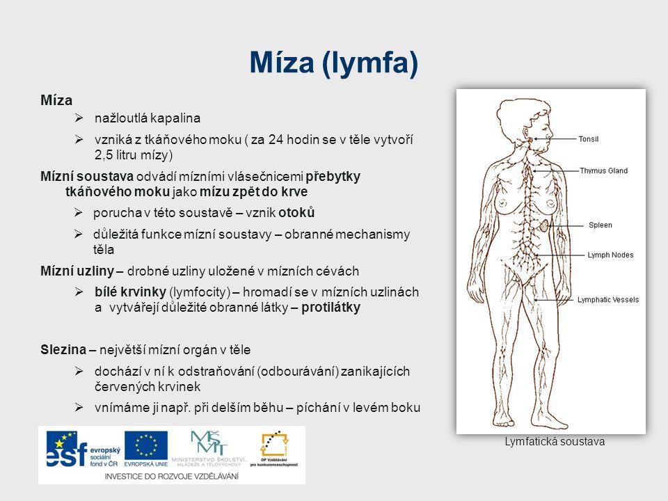 Míza (lymfa) Míza  nažloutlá kapalina  vzniká z tkáňového moku ( za 24 hodin se v těle vytvoří 2,5 litru mízy) Mízní soustava odvádí mízními vlásečn