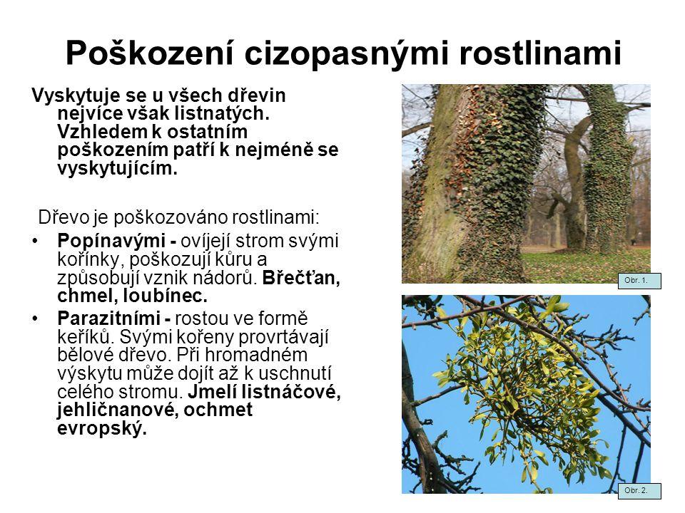 Poškození cizopasnými rostlinami Vyskytuje se u všech dřevin nejvíce však listnatých. Vzhledem k ostatním poškozením patří k nejméně se vyskytujícím.