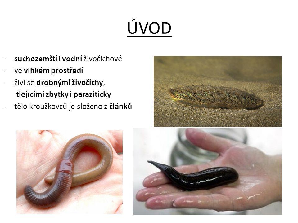 ÚVOD -suchozemští i vodní živočichové -ve vlhkém prostředí -živí se drobnými živočichy, tlejícími zbytky i paraziticky -tělo kroužkovců je složeno z č
