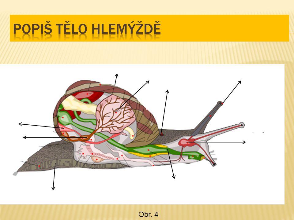 1,Vývin hlavonožců a, dokonale vyvinutá 2, Dýchací soustava b, má chobotnice 3, Nervová soustava c, žábry 4, Pozůstatek schránky d, sépiová kost 5, Největší hlavonožec e, vystřikování vody z nálevky 6, Pohyb sépie f, krakatice g, přímý