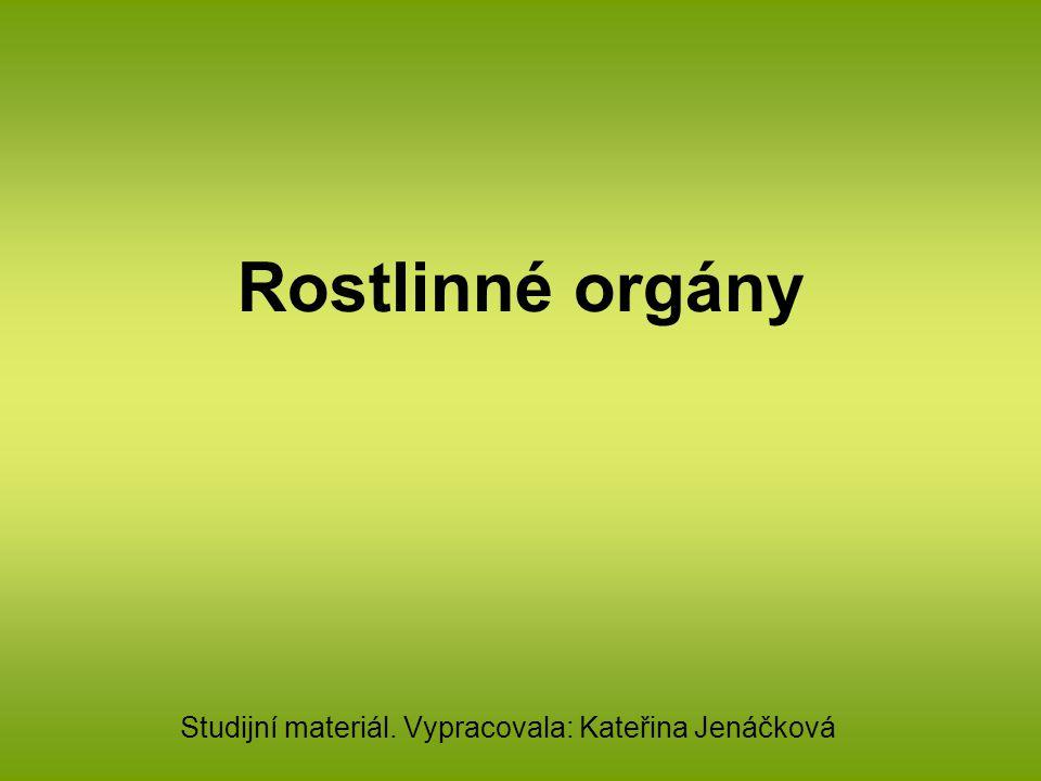Orgány vegetativní: kořen stonek list Vyvinuly se u cévnatých rostlin ( tj.