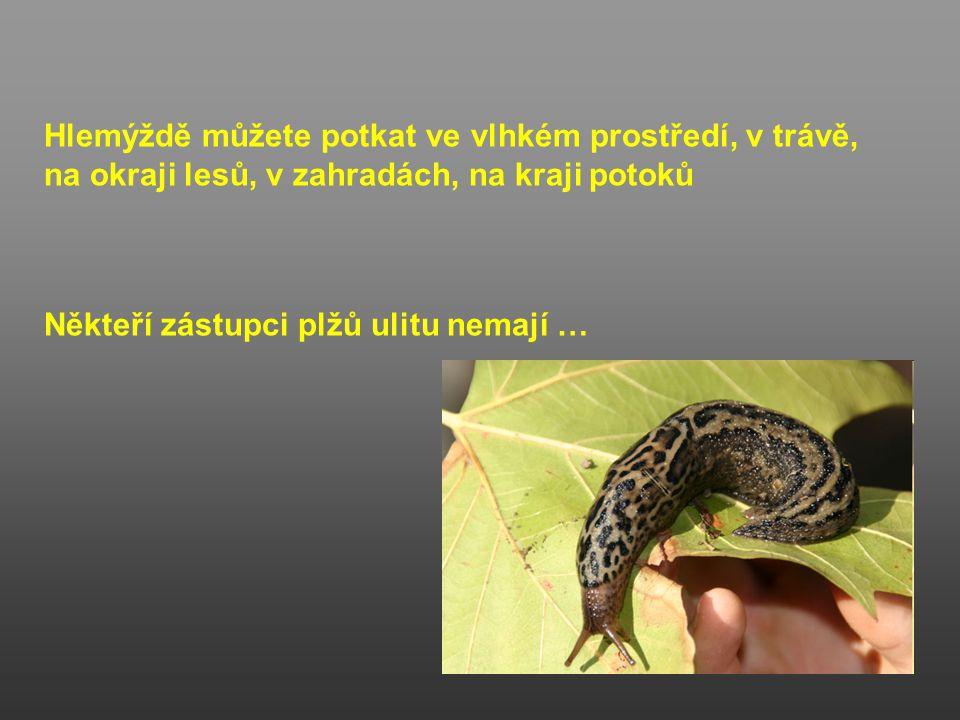 Vnitřní ústrojí hlemýždě zahradního -Hlemýžď se živí rostlinou potravou, kterou strouhá drsným jazýčkem (radula) -V trávicí trubice je tvořená jícnem, žaludkem a střevem -Řitní otvor vyúsťuje zpod ulity za hlavovou ústa hltan jícen žaludek střevo řitní otvor TRÁVICÍ SOUSTAVA