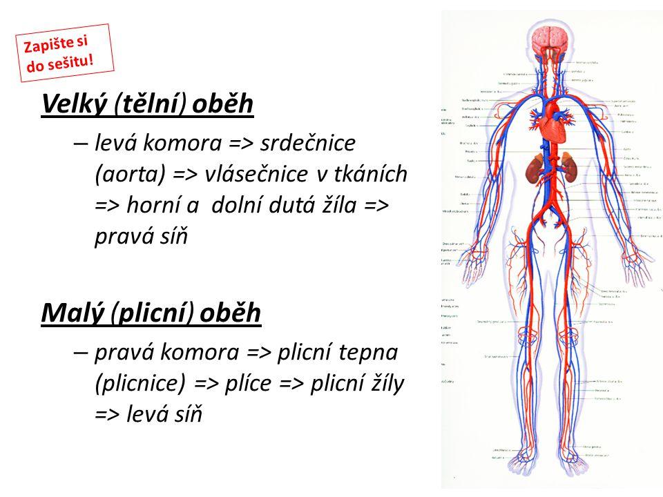 Velký (tělní) oběh – levá komora => srdečnice (aorta) => vlásečnice v tkáních => horní a dolní dutá žíla => pravá síň Malý (plicní) oběh – pravá komor