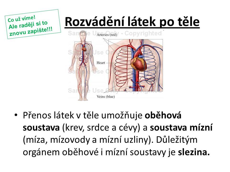 Rozvádění látek po těle Přenos látek v těle umožňuje oběhová soustava (krev, srdce a cévy) a soustava mízní (míza, mízovody a mízní uzliny). Důležitým