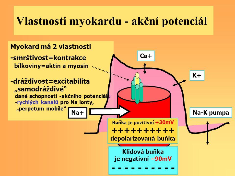 """Myokard má 2 vlastnosti -smrštivost=kontrakce bílkoviny=aktin a myosin -dráždivost=excitabilita """"samodráždivé"""" dané schopnosti -akčního potenciálu -ry"""