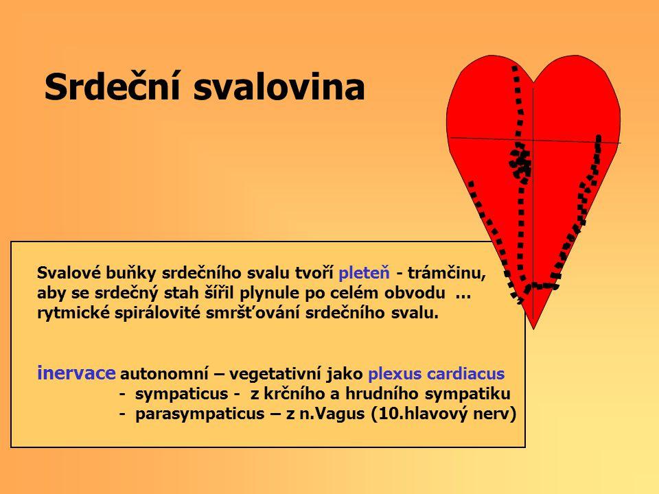 Srdeční svalovina Svalové buňky srdečního svalu tvoří pleteň - trámčinu, aby se srdečný stah šířil plynule po celém obvodu … rytmické spirálovité smrš