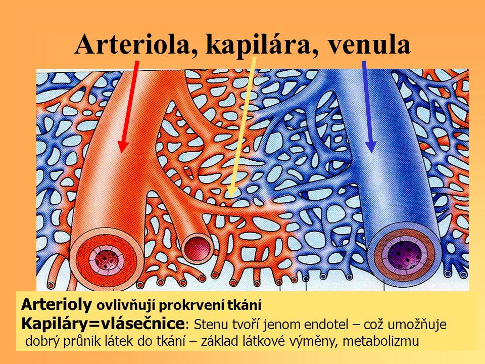 Arteriola, kapilára, venula Arterioly ovlivňují prokrvení tkání Kapiláry=vlásečnice : Stenu tvoří jenom endotel – což umožňuje dobrý průnik látek do t