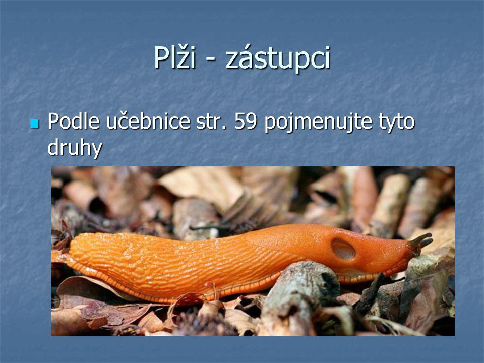 Plži - zástupci Podle učebnice str. 59 pojmenujte tyto druhy Podle učebnice str. 59 pojmenujte tyto druhy