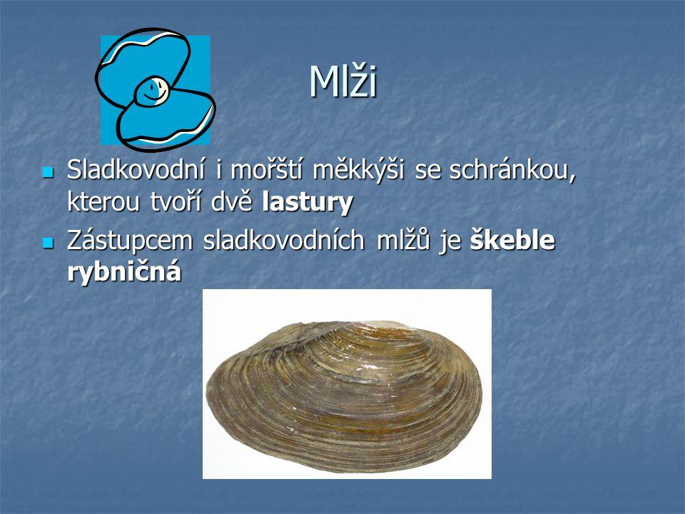 Mlži Sladkovodní i mořští měkkýši se schránkou, kterou tvoří dvě lastury Sladkovodní i mořští měkkýši se schránkou, kterou tvoří dvě lastury Zástupcem