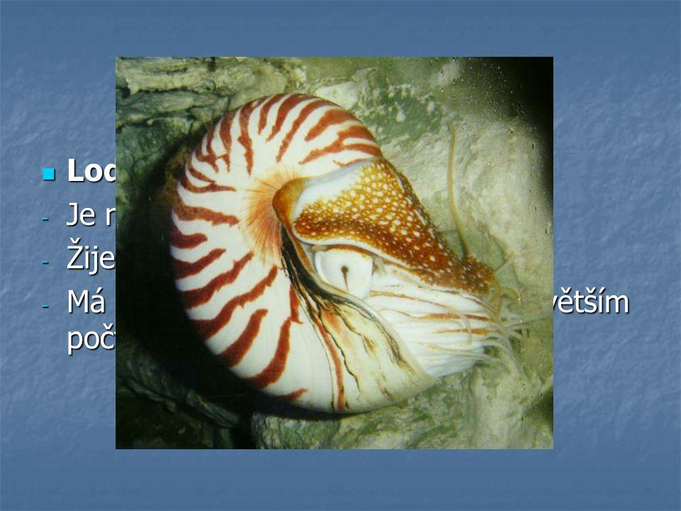 """Hlavonožci - zástupci Loděnka hlubinná -J-J-J-Je nazývána """"živou zkamenělinou"""" -Ž-Ž-Ž-Žije v hloubkách Tichého oceánu -M-M-M-Má spirálovitě stočenou s"""