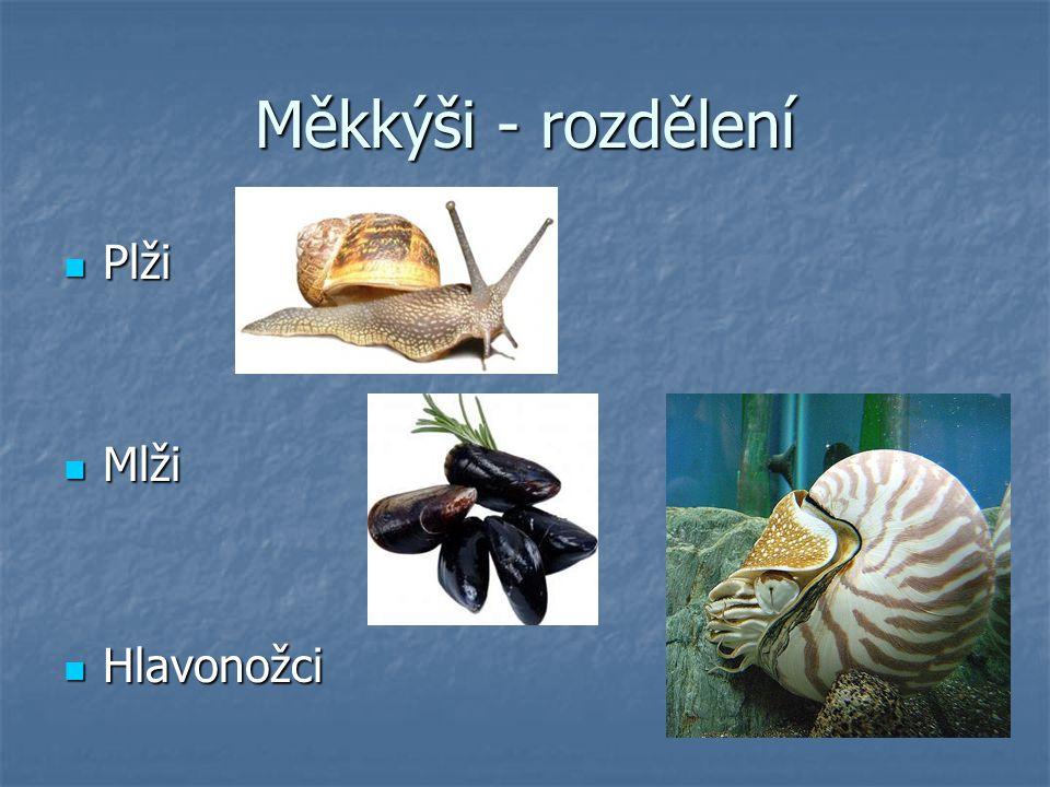 Měkkýši - rozdělení Plži Plži Mlži Mlži Hlavonožci Hlavonožci