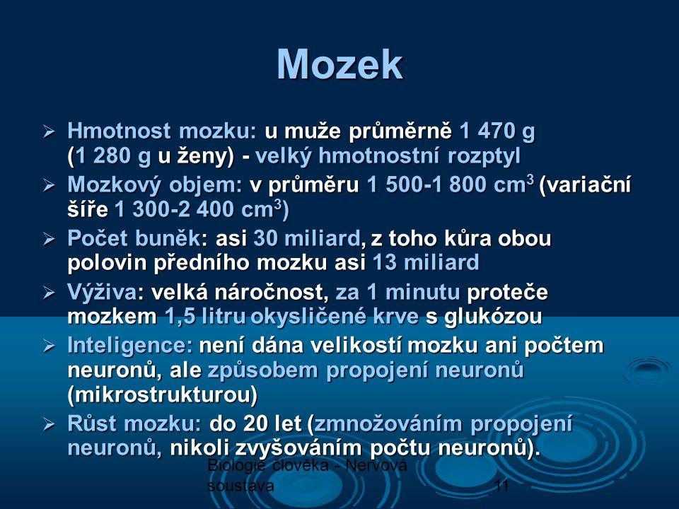 Biologie člověka - Nervová soustava11  Hmotnost mozku: u muže průměrně 1 470 g (1 280 g u ženy) - velký hmotnostní rozptyl  Hmotnost mozku: u muže p