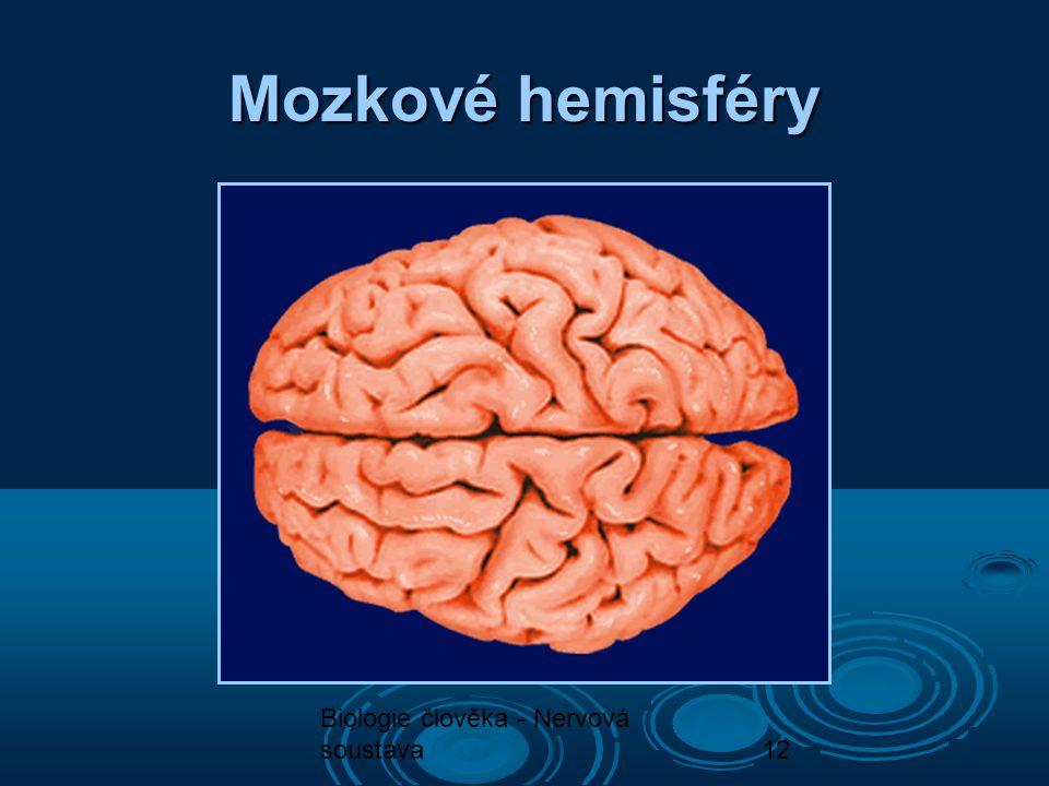Biologie člověka - Nervová soustava12 Mozkové hemisféry