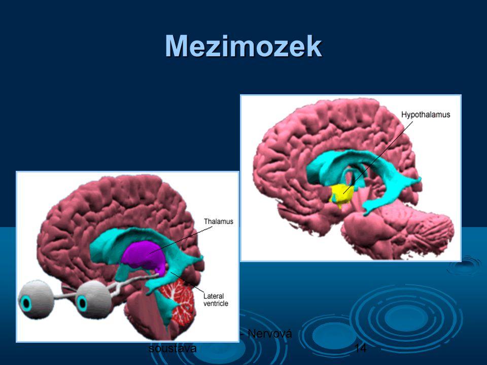 Biologie člověka - Nervová soustava14 Mezimozek