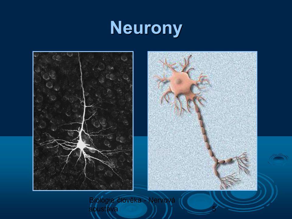 6 Neurony